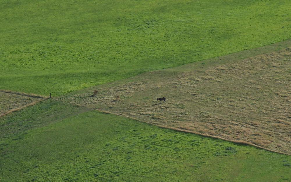 Ein Pferd allein auf einem großem Feld