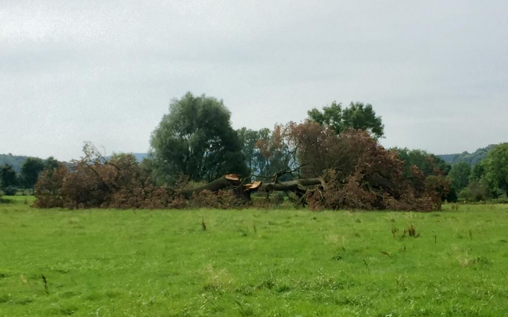 Ein Baum in den Emmerwiesen