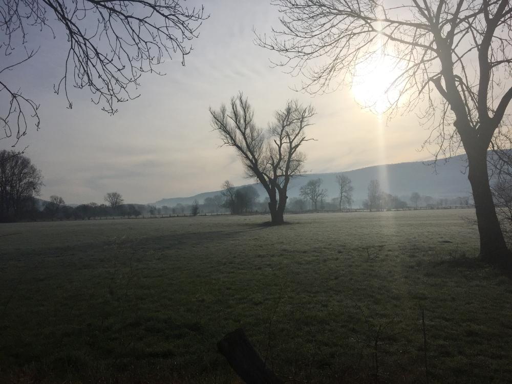 Morgens um 8 Uhr in den Lügder Emmerwiesen