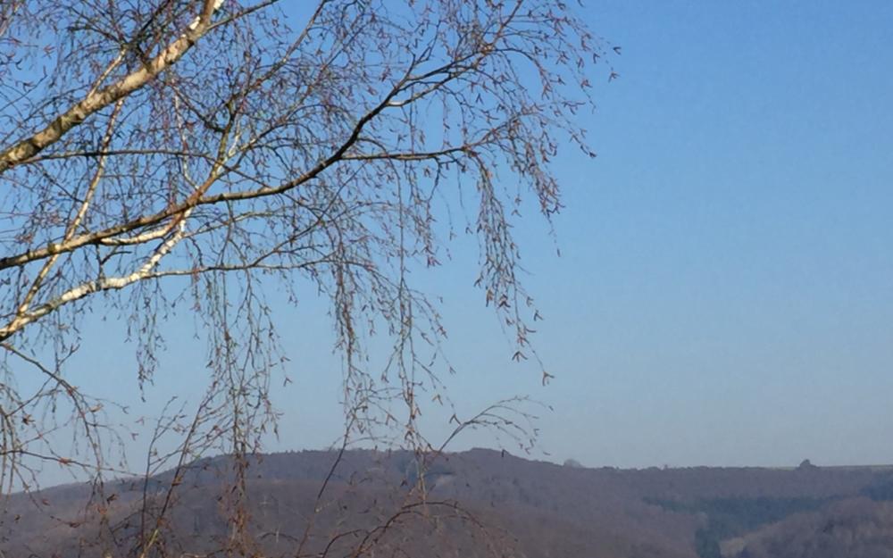 Birkenzweige, im Hintergrund Hügel