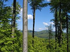 Im Vordergrund Bäume im Hintergrund bewaldete Berge