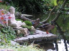 Ein Teich, eine Buddha-Figur aus Stein, davor zwei Enten