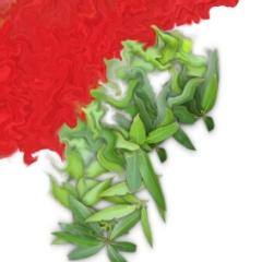 Kirschlorbeer, der in Rot zu verschmelzen scheint