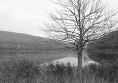 Ein Baum ohne Blätter, im Hintergrund ein See und Berge