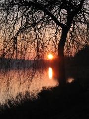 Ein Baum ohne Laub vor einem See, im Hintergrund eine untergehende Sonne