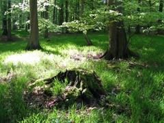 Ein Waldboden im Sonnenlicht