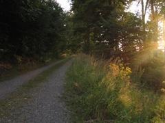 Ein Waldweg, von rechts erhellen ihn Sonnenstrahlen