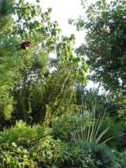 Viele grüne Pflanzen