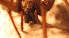 Ein Teil einer Spinne
