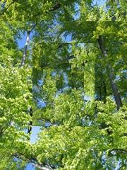 Eine Collage aus einem Bild mit Bäumen im Maigrün
