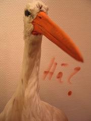 Der Kopf eines Storches – darunter das Wort – Hä?