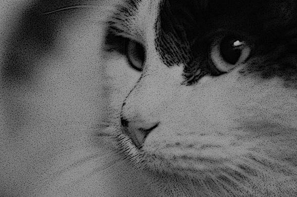 Ein Katzenkater