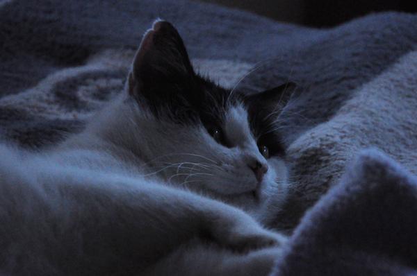 Ein Katzenkater auf einer Wolldecke