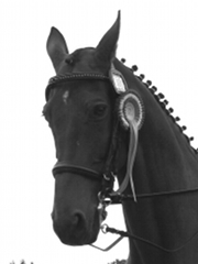 Der Kopf von einem Pferd