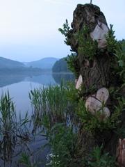 Ein See, im Vordergrund üppige Uferpflanzen, im Hintergrund Berge