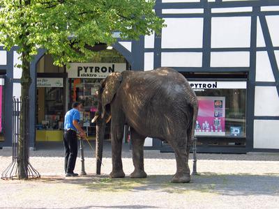 Ein kleiner Elefant vor einem Geschäft.