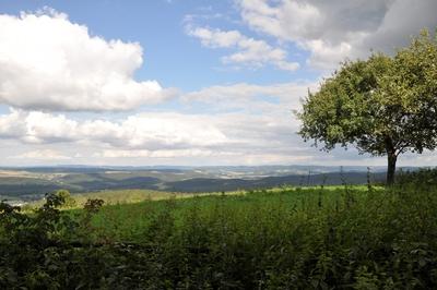 Ein Baum auf einer Wiese, im Hintergrund ein Tal.