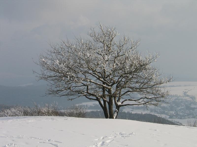 Ein Baum im Schnee.