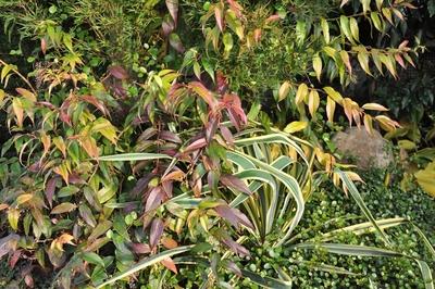 Viele verschiedene Pflanzen wachsen durcheinander.