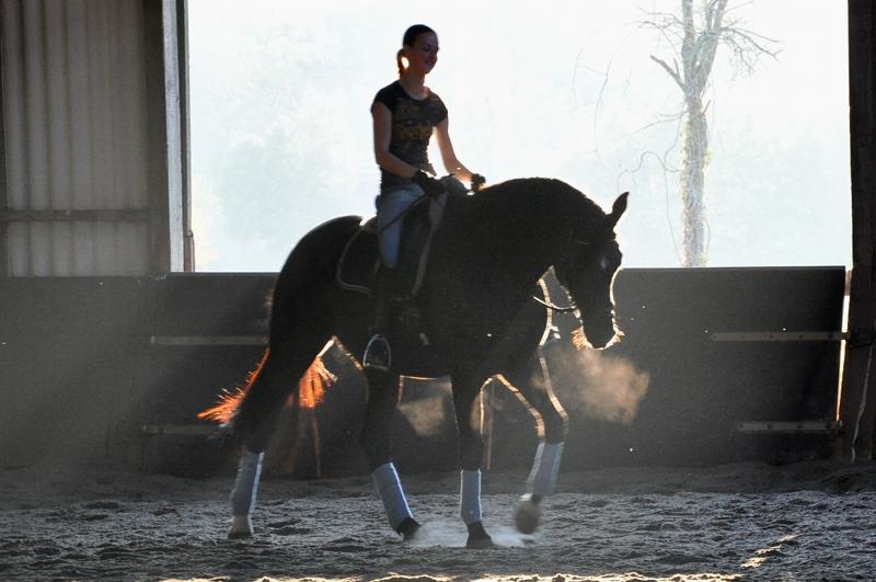 Reiterin und Pferd im Licht der untergehenden Sonne.