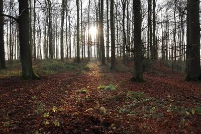 Sonnenuntergang auf der Herlingsburg: Die Sonne strahlt zwischen vielen Bäumen hindurch.