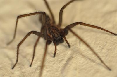 Eine Spinne