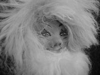 Der Kopf einer Puppe mit vielen Haaren und einem dichten Bart. Sie soll einen Waldschrat darstellen.
