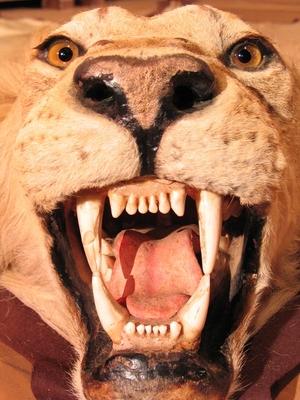 Ein Löwenkopf, aus dem Bühnenbild von Dinner for One