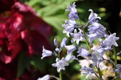 Blaue und rote Blüten