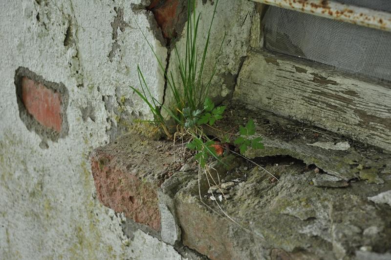 Gras wächst aus einer Fensterbank