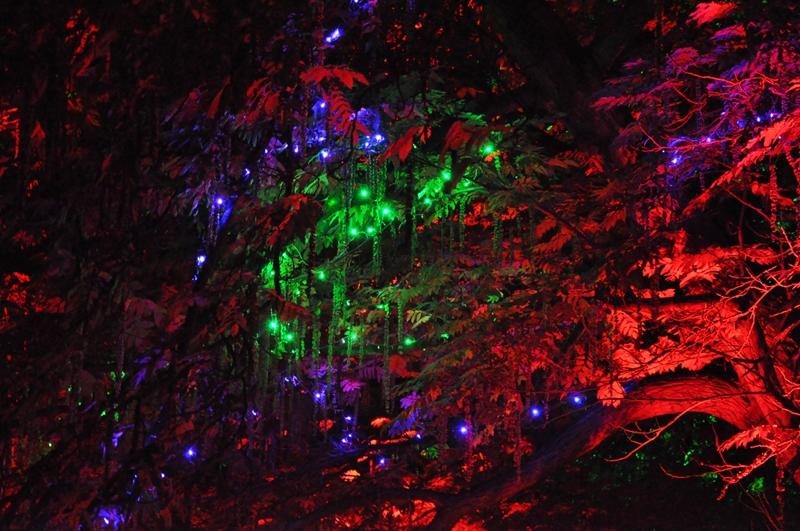 Mit verschiedenfarbigen Leuchtmitteln angestrahlterBaum
