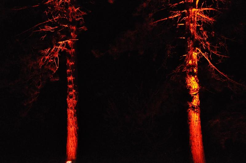 Zwei illuminierte Bäume