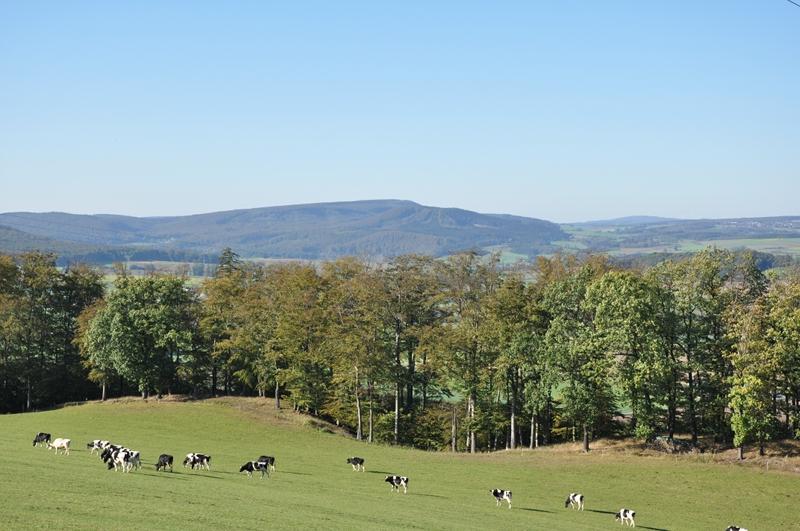 Kühe auf einer Wiese, im Hintergrund Berge