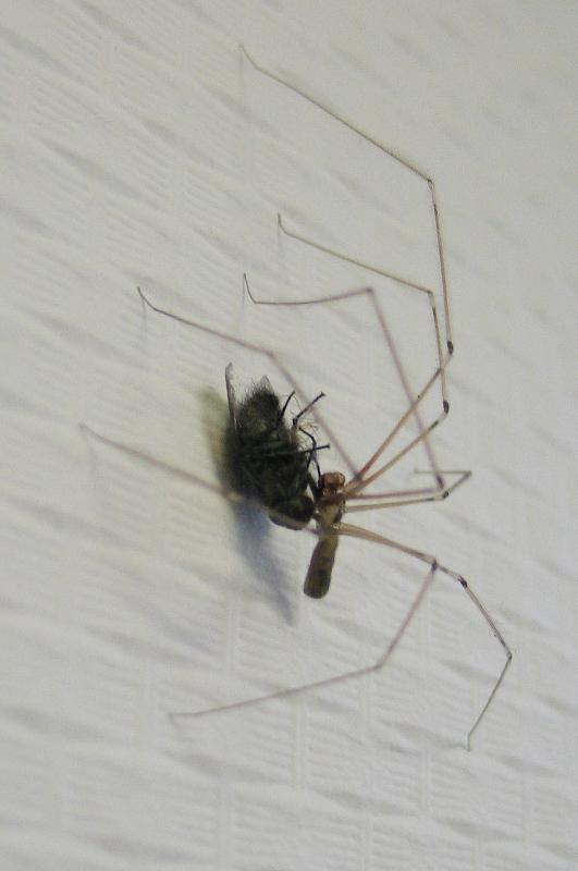 Eine Spinne und eine Fliege