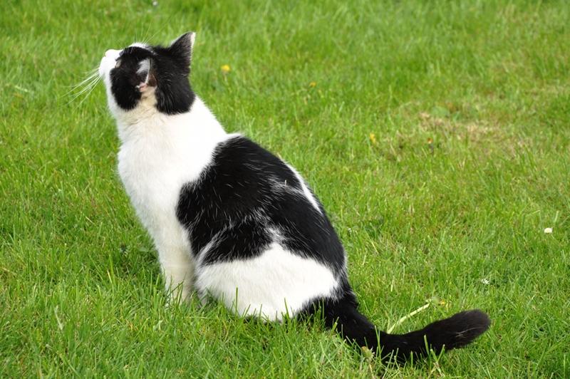 Eine Katze guckt hoch