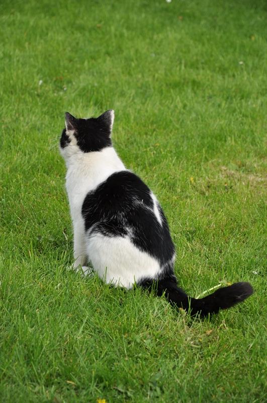 Eine Katze mit dem Rücken zurKamera