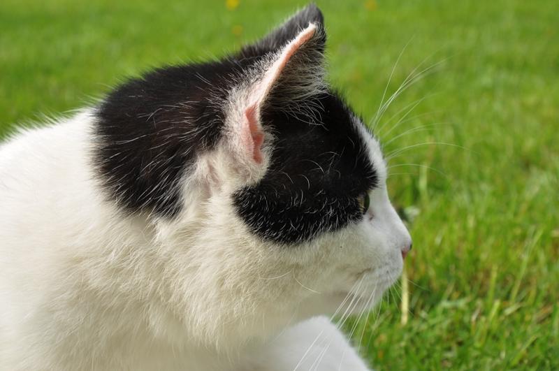 Ein Katzenkopf