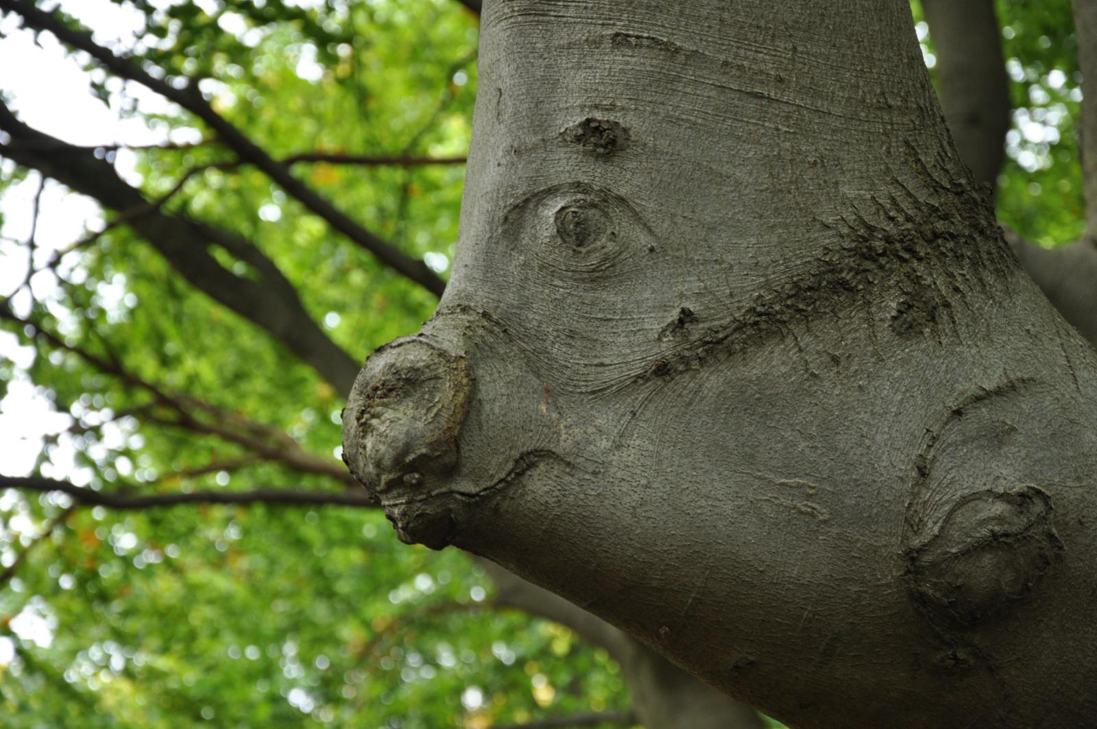 Ein Baumstamm dessen Rinde wie der Kopf eines Schweins aussieht