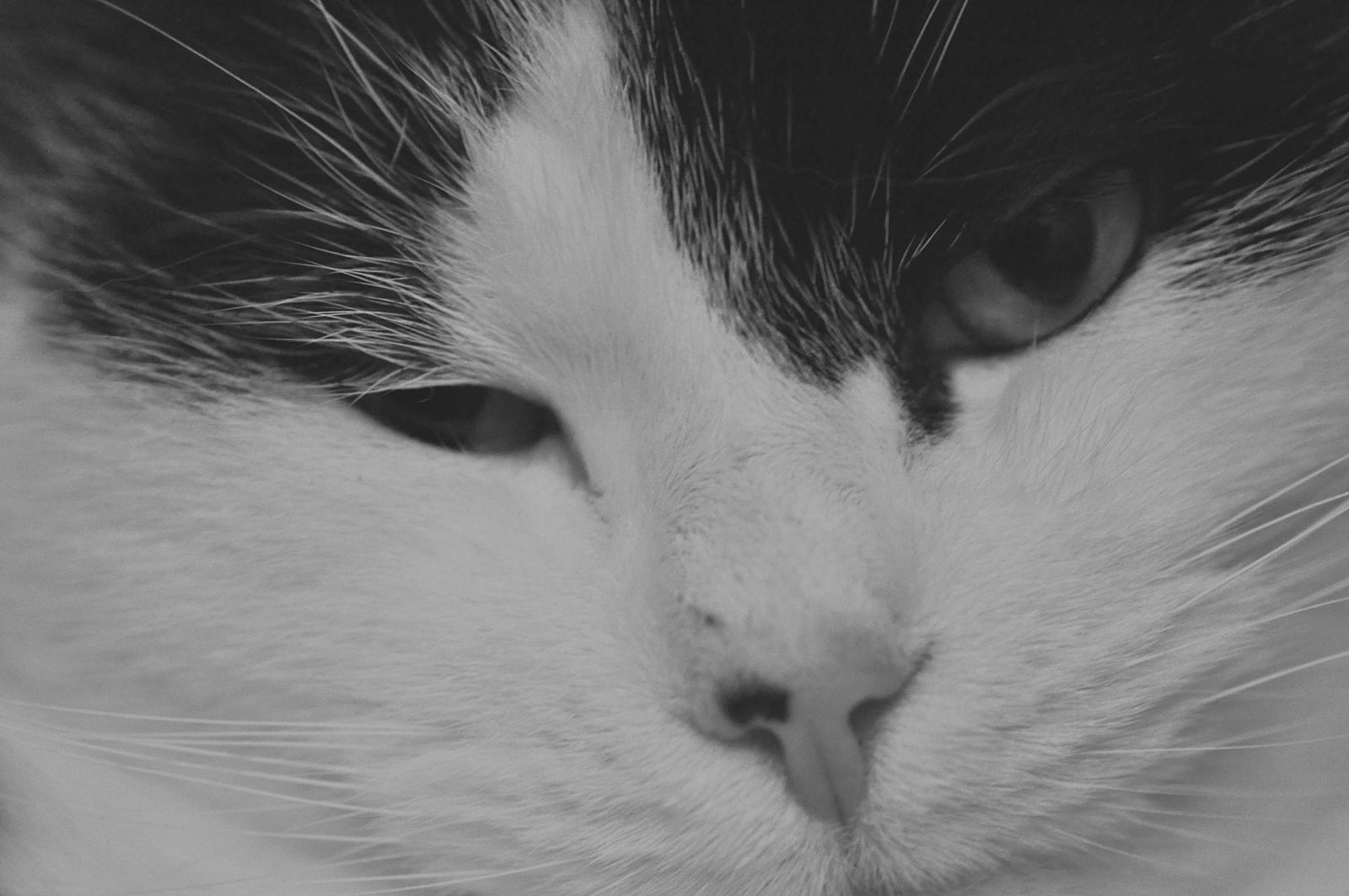 Ein Katzengesicht