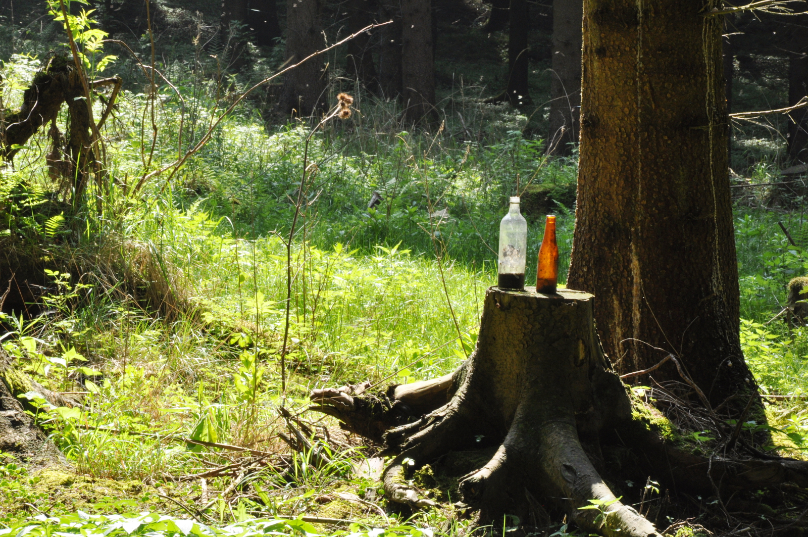 Zwei leere Flaschen auf einem Baumstumpf im Wald