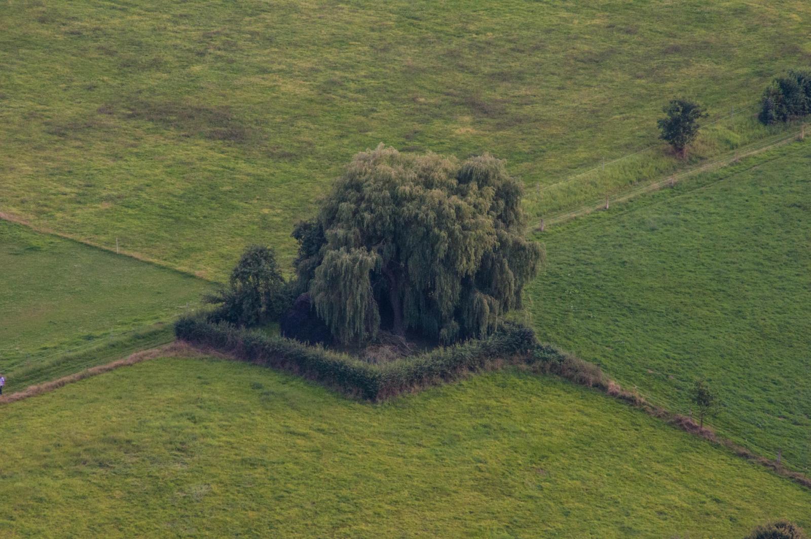 Ein Garten mitten in vielen Wiesen