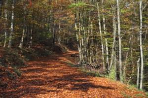 Ein Weg voll Laub, rechts und links von der Sonnen angestrahlte Bäume.