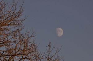 Ein Baum ohne Laub, am Himmel der Mond.