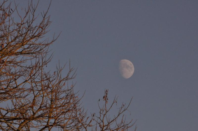 Eine laubleere Baumkrone und der Mond.