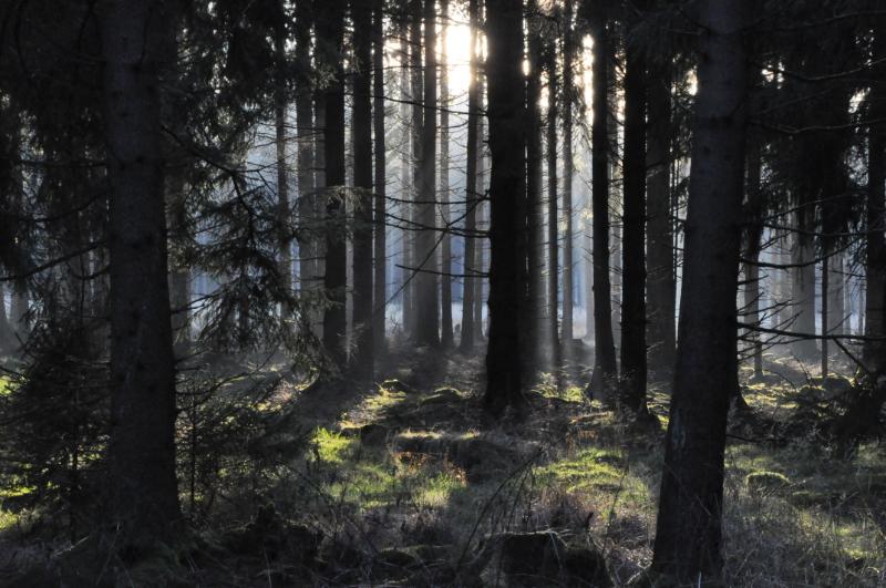 Die Abendsonne zweigt sich zwischen Baumstämmen.