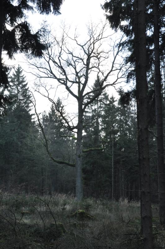 Ungleichmäßig gewachsener Baum
