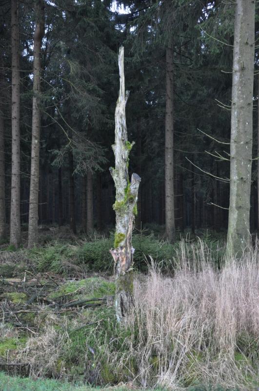 Ein alter Baumstumpf der an einen erhobenen Zeigefinger erinnert.