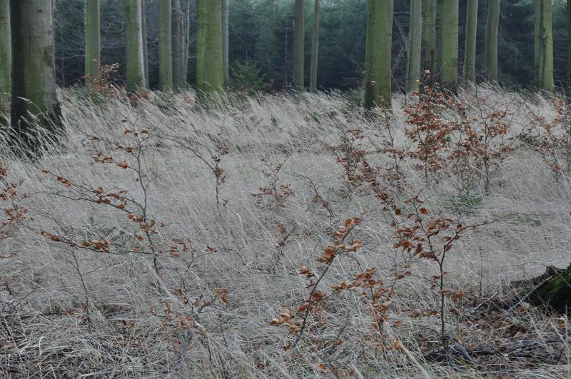 Ein Waldboden mit trockenem Gras.