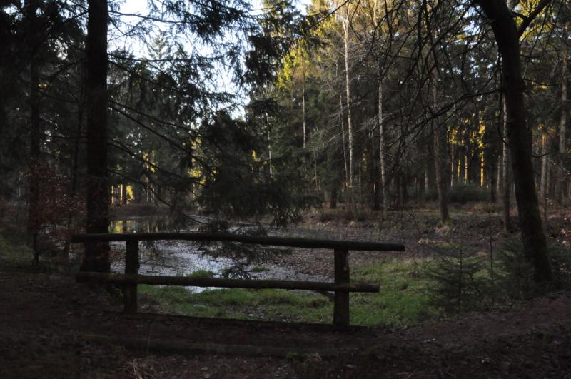 Ein halbtrockener Teich im Wald.