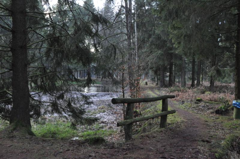 Ein Weg führt um einen halb trockenen Teich im Wald.